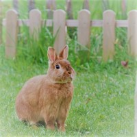 Harmless Ways to Keep Rabbits out of the Garden