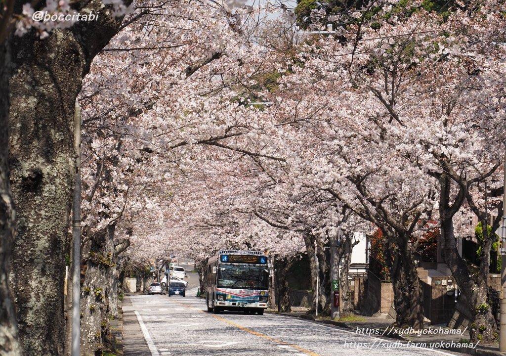 鷹取桜並木
