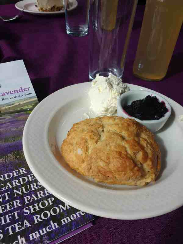 lavender scones and lemonade in Yorkshire