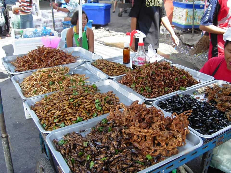 a feast of unusual foods in China - bugs for dinner