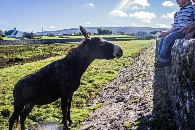 Donkey and child on a stone wall on the Wild Atlantic Way Ireland