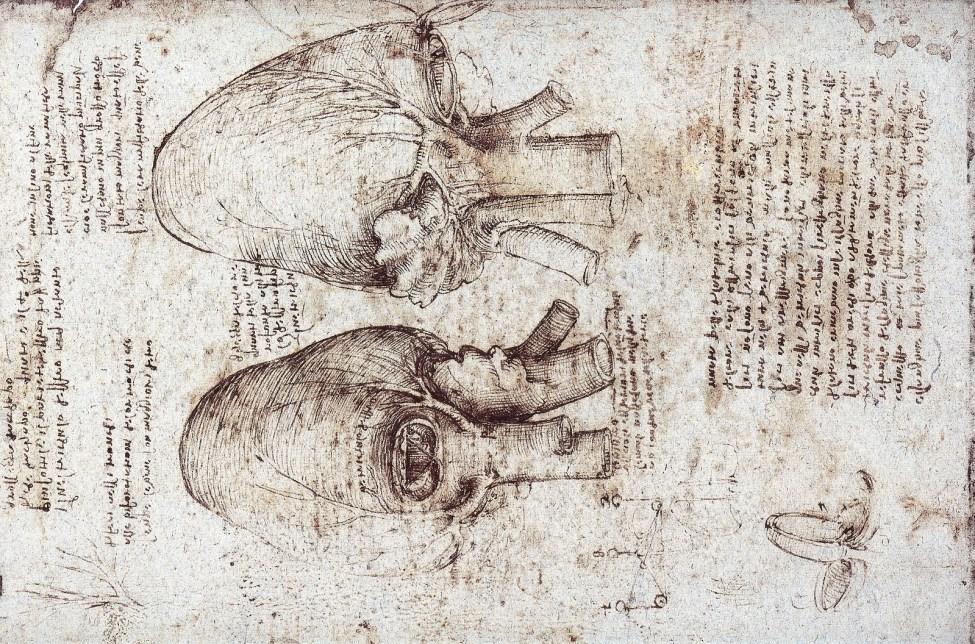 Anatomy Of The Heart, Leonardo Da Vinci
