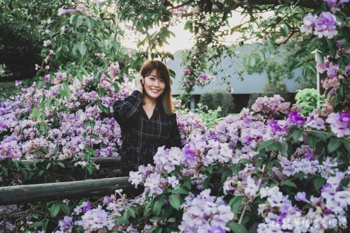 新竹網美拍照景點推薦!新竹竹北新瓦屋季節限定的蒜香藤滿開,快來拍美炸的紫色瀑布