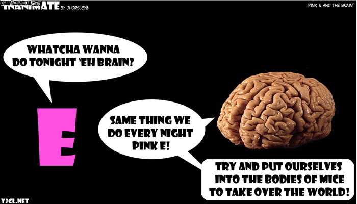 Pink E And The Brain