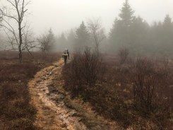 Coop climbs Blackbird Knob (TR 511)