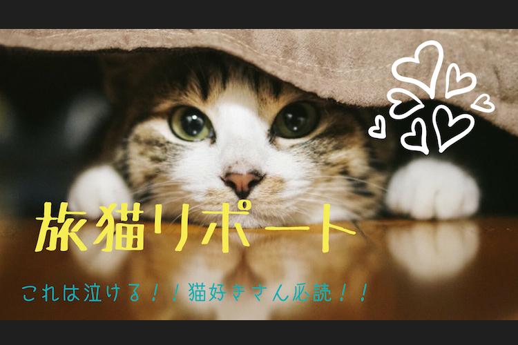 【感想】これは泣ける。。猫好きさん必読!「旅猫リポート」を読みました。