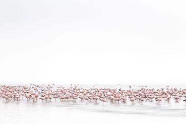 İsveçrəli fotoqraf Alessandra Meniconzinin 'Qızılqaz Ruhu' adlı çalışması.