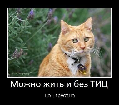 тИЦ мем - фото