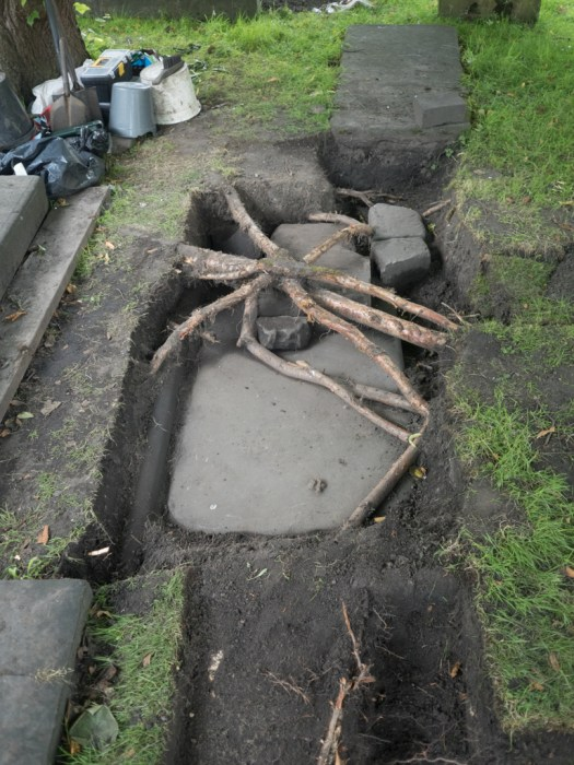 The main DHCP trench and weird roots