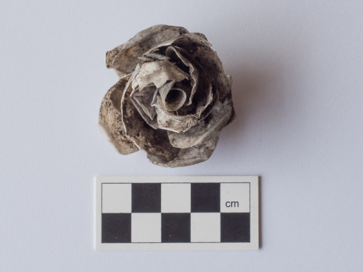The rose what we found on Thursday