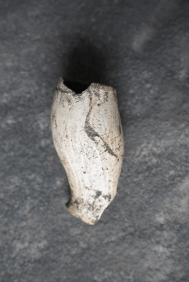 Clay pipe bowl found during recent excavation
