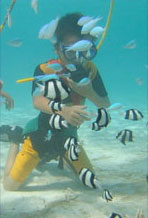 activities_diving_side_panel