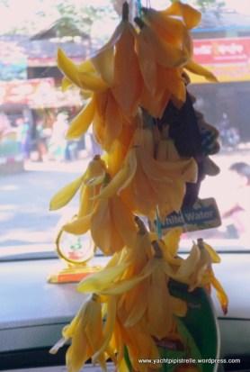Fragrant flower of Joy Perfume Tree - found only near Mt Popa