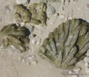 Fossilised shells