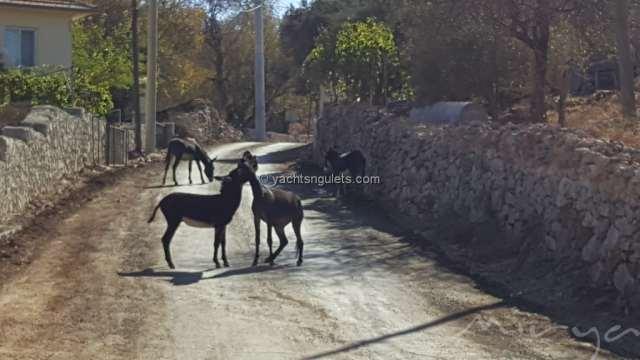 Sogut village roads
