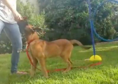 Hundetherapie – Mädchenhaus
