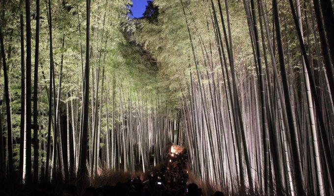 [12月中旬]京都 嵐山 花灯路