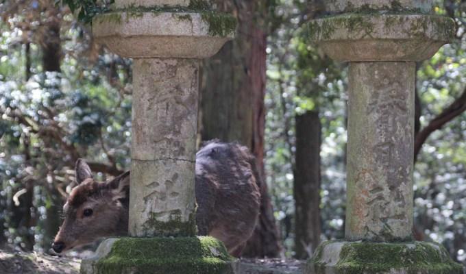 Manyo Botanic Garden