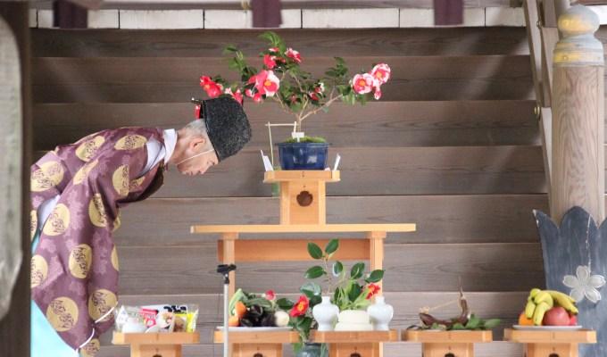 [令和2年3月22日]奈良 奈良縣護國神社 椿まつり