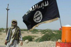 تنظيم القاعدة البيضاء