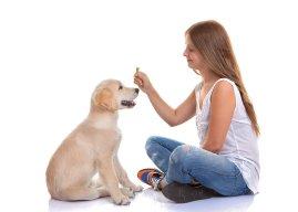 5 главных правил общения с собакой