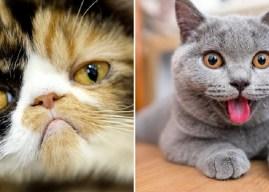Как кошки выражают эмоции