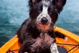 Kayak Pupper