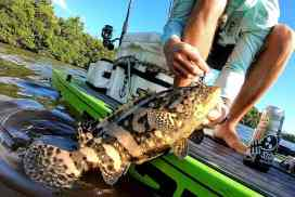Grouper on the SUP