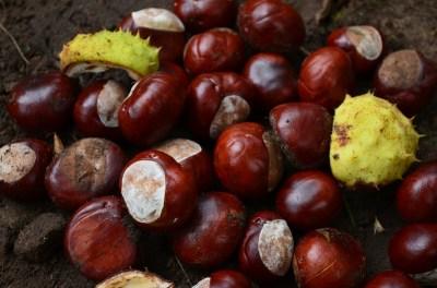 chestnut-454572_1280