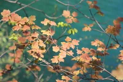 leaves-449581_1280