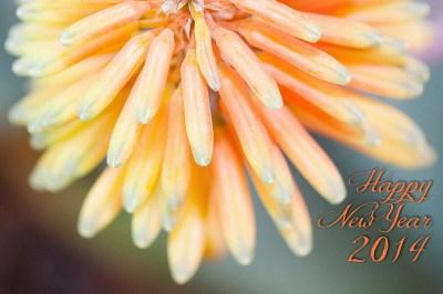 flowers-234965_1280