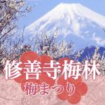 修善寺の梅まつり2019に行こう!梅林の開花状況と見どころ