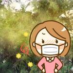 2018年スギ花粉の時期。ピークはいつまで?杉花粉の終わり期間