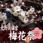 北野天満宮の梅花祭。2017年の日程とおすすめの見どころ