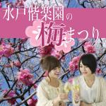 水戸偕楽園の梅まつり2019年。見頃と開花状況は?