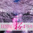 sakura_meguro_river_eyecatch