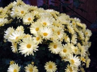 お墓参りの花はどんな種類が適しているのか調べてみました。