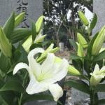 お墓参りの花はどんな種類がいい?値段の目安。マナーと選び方