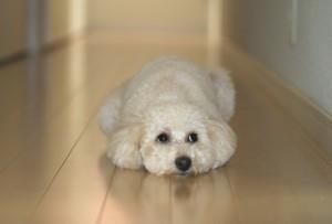 dog_heat_measure_003