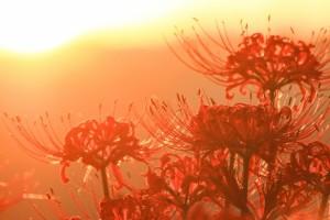 autumnal_equinox_003