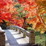 京都の紅葉ライトアップの名所と穴場スポット2018。見ごろ時期は?
