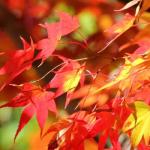 鎌倉の紅葉2017。名所の見ごろ時期と穴場スポット。ハイキングも