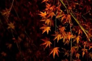 kiyomizudera_autumn_leaves_2015_004