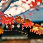 東福寺の紅葉2016!見ごろとライトアップ時間。拝観料と混雑状況