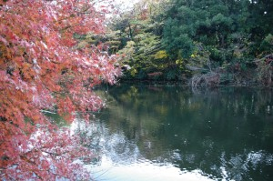 atumun_leaves_shinjyukugyoen_006