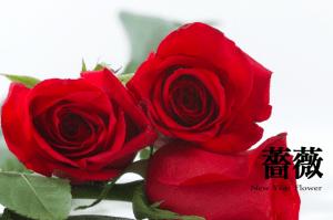 newyear_flower_012