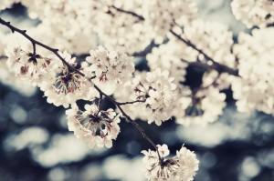 2016_spring_vacation_001