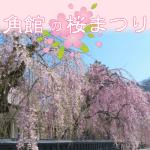 角館桜開花予想と桜まつり2016。見頃の時期は?駐車場と混雑状況