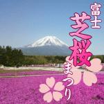 富士芝桜まつり2018。見頃と開花状況は?渋滞と駐車場の混雑情報