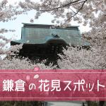 鎌倉の桜の開花時期2018。名所の花見スポット満開予想と混雑状況